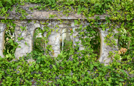 con dao: Old architecture of fence with green plants in Con Dao island, Vietnam.