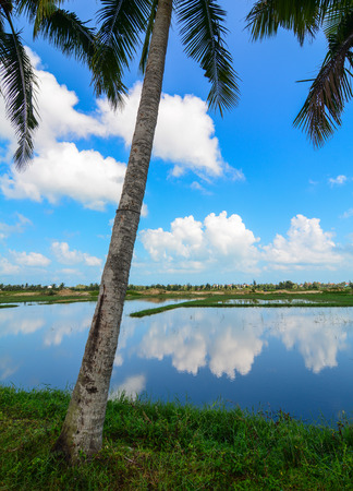 River scene with palm tree at sunny day in Hoi An, Vietnam.