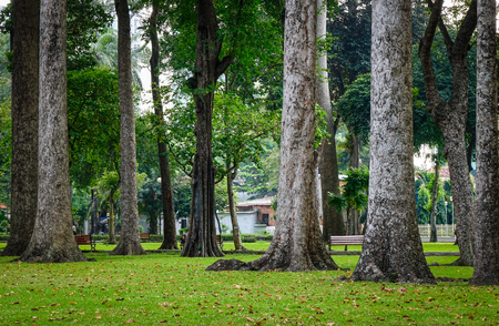 Huge trees with grass at the public park in Saigon, Vietnam.