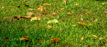 Autumn leaves on grass at the park in sunny day