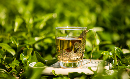 Glass cup of tea on the field at the sunny day. Close up. Stock Photo