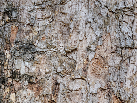 Close-up of pine tree bark at the public park in sunny day
