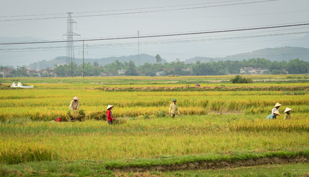 Ha Tinh, Vietnam - Jun 17, 2012. Farmers working on rice fields in Ha Tinh, Vietnam. In 2004, agriculture  accounted for 21.8 percent of Vietnam gross domestic product (GDP). Editorial