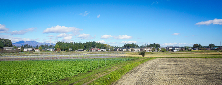 Vegetable field with small village at sunny day in Nikko, Japan.