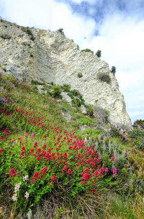 Landscape of mountain with wild flowers at sunny day in Mackenzie, New Zealand.