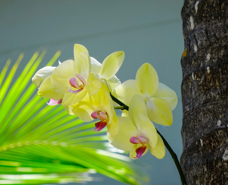 Yellow orchid flowers blooming at the park in spring time. Close up. Stock Photo