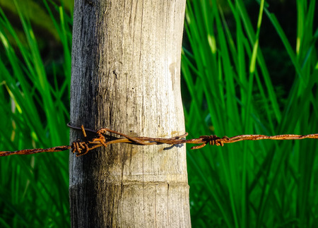 Close-up of rusty barbed wire fence at sunny day. Stock Photo