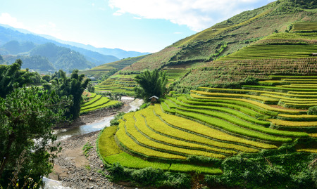 Landscape of terraced rice field with a stream in Northern Vietnam. Terraced rice fields in Vietnam were voted as one of seven most beautiful and impressive ones of Asia. Stock Photo