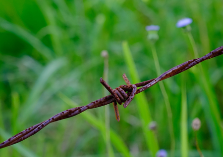 Close-up of rusty barbed wire fence with nature background.