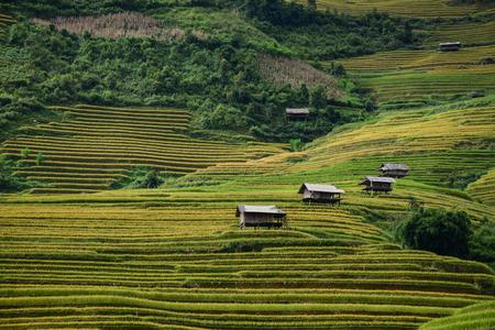 Kleine huizen met terrasvormige rijstvelden in Sa Pa, Noord-Vietnam. Rijstterrassen zijn hellingen die door de natuur worden geclaimd voor de teelt in heuvelachtige of bergachtige gebieden. Stockfoto