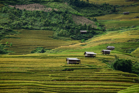 Small houses with terraced rice field in Sa Pa, Northern Vietnam. Rice terraces are slopes claimed from nature for cultivation in hilly or mountainous areas. Фото со стока