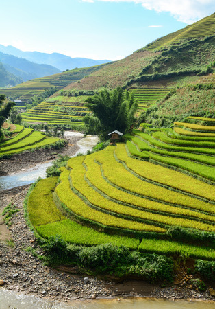 Landscape of terraced rice field at sunny day in Northern Vietnam. Terraced rice fields in Vietnam were voted as one of seven most beautiful and impressive ones of Asia.