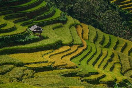 Terrasvormig rijstveld met klein huis in Mu Cang Chai Township, Noord-Vietnam. Mu Cang Chai is een van de mooiste terrasvormige rijstvelden in Vietnam. Stockfoto