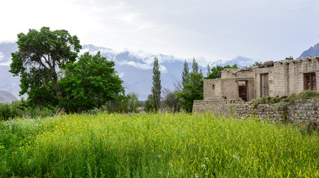 Stone houses with flower field at a Tibetan village in Ladakh, India.