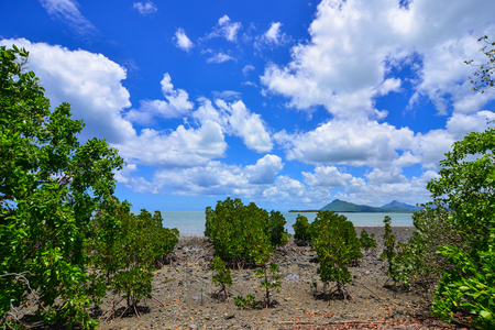 Mangrove forest at sunny day in Le Morne, Mauritius.