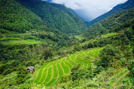 Terraced rice field on the mountain in Bhutan. Bhutanese red rice is the country most widely known agricultural export.