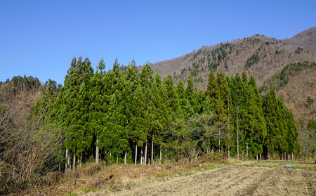 Green tree forest with mountains at sunny day in summer.