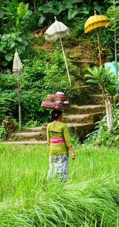 A Burmese woman carrying food for praying at Elephant temple in Bali, Indonesia. Bali is a popular tourist destination, which has seen a significant rise in tourists. Stock Photo