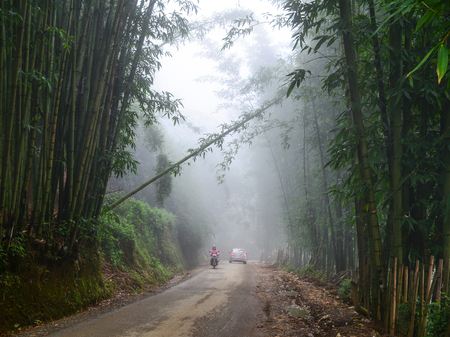 Mountain road with bamboo forest at misty day in Sapa, Vietnam. Sapa is a beautiful, mountainous town in northern Vietnam along the border with China.
