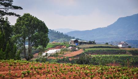 dalat: Mountain scenery with vegetable plantation in Dalat Highlands, Vietnam.