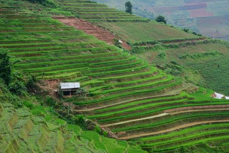 Landschap van terrasvormig padieveld met een plattelandshuisje in Sapa, Vietnam. De terrasvormige rijstvelden in Sapa zijn de mooiste in Vietnam.