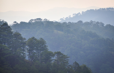Pine tree forest with mountains at sunrise in Dalat, Vietnam. Da Lat is located 1,500 m above sea level on the Langbian Plateau. Stock fotó