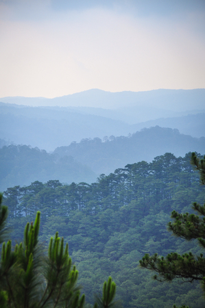 Pine tree forest with mountains in Dalat, Vietnam. Da Lat is located 1,500 m above sea level on the Langbian Plateau.