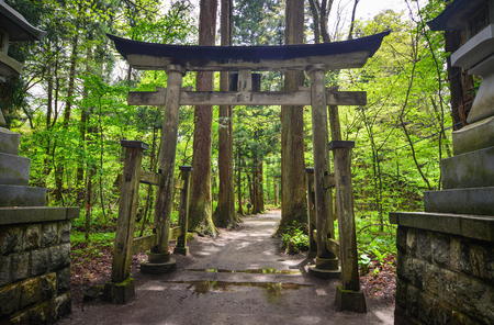 Wooden Japanese gate (torii) at green forest in Aomori, Japan.