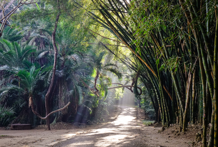Bamboo forest at the Botanic Garden in Pyin Oo Lwin, Myanmar. The park has been used to promote extensive ecotourism in Myanmar.