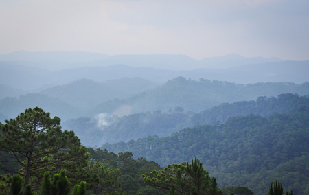 Mountain scenery of Dalat Highlands in Vietnam. Da Lat specific sights are pine wood with twisting roads and tree marigold blossom in the winter.