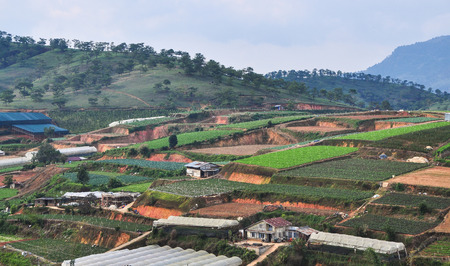 Vegetable plantation on Dalat Highlands in Vietnam. Da Lat is located 1,500 m above sea level on the Langbian Plateau.