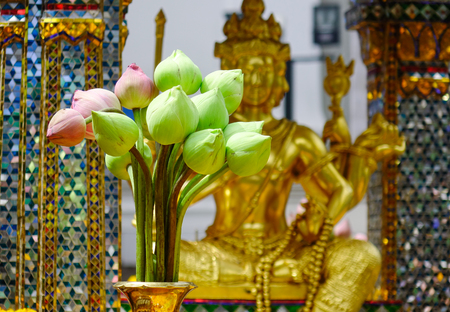 Lotus flowers offering for Gods at Erawan temple in Bangkok, Thailand. The Erawan Hindu shrine is a major landmark in the very centre of Bangkok.