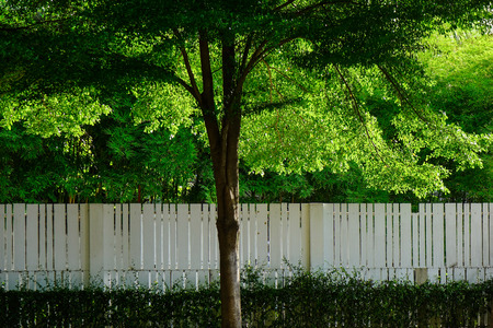 Green trees with wooden fence at botanic garden in Pattaya, Thailand. Stock Photo