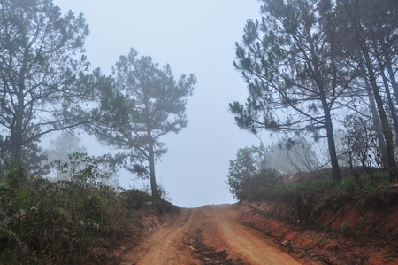 Mountain road at misty day in Dalat Highlands in Vietnam. Da Lat is located 1,500 m above sea level on the Langbian Plateau.
