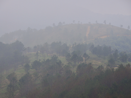 Mountain scenery with pine trees on Dalat Highlands in Vietnam. Da Lat in Central Highlands, is centered around a lake and golf course, and surrounded by hills, pine forests.