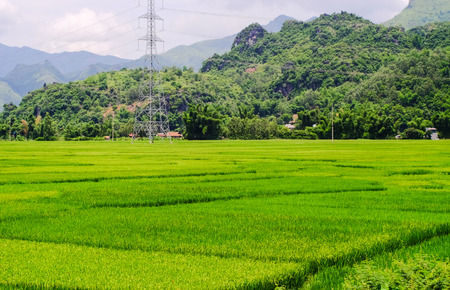 Beautiful rice field with mountains in Northern Vietnam. Vietnam is one of world richest agricultural regions and is the second-largest exporter worldwide.