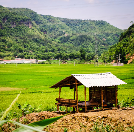 A small shack with rice field in Northern Vietnam. Vietnam is one of world richest agricultural regions and is the second-largest exporter worldwide.