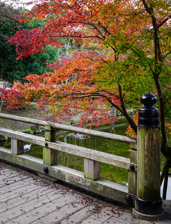 Autumn trees with a wooden bridge at Nara Park in Japan. Nara Park is a public park located in the city of Nara, Japan, at the foot of Mount Wakakusa.