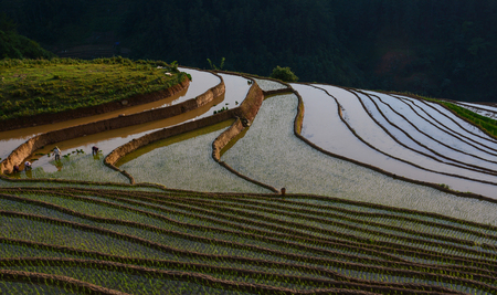 Rice field at rain season in Mu Cang Chai, Northern Vietnam. Mu Cang Chai is famous for its 700 hectares of terraced rice fields and a popular destination for tourists.