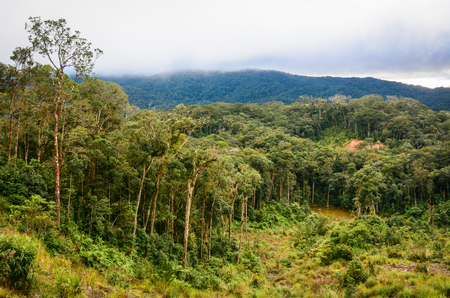 Forest and mountain at rainy day in Dalat, Vietnam. Dalat Highlands in Vietnam. Da Lat is located 1,500 m above sea level on the Langbian Plateau.