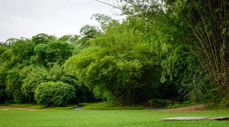 シンガポールの植物園で竹林。ライオンの都市、庭園都市と呼ばれるシンガポールは、東南アジアの主権都市国家です。