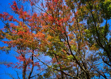 Autumn trees at sunny day in Katsuura, Kansai, Japan.