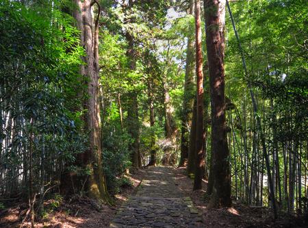 Walking trail of Kumano Kodo in Kansai, Japan. The Kumano Kodo is a series of ancient pilgrimage routes that crisscross the Kii Hanto, the largest Peninsula of Japan.