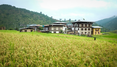 Sopsokha village with rice field at sunny day in Bhutan. Agriculture has a dominant role in Bhutan economy. Most of the population is involved in agriculture.
