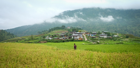 Sopsokha village with rice field at misty day in Bhutan. Agriculture has a dominant role in Bhutan economy. Most of the population is involved in agriculture.