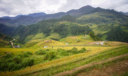 Terraced rice fields in Yen Bai, Vietnam. The rice terrace fields is one of the most popular tourist attractions in Vietnam.