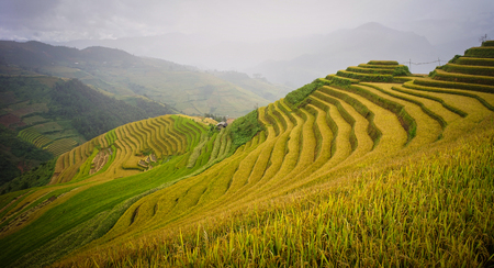 Terraced rice field in Sapa, Vietnam. Terraced fields in the mountainous provinces in northern Vietnam will start showing gorgeous colors in October. Stock Photo
