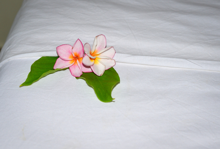 luxury room: Plumeria flowers on bed at hotel in Phan Thiet, Vietnam.