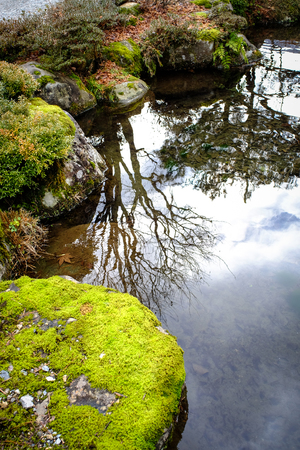 Mossy Stones And Green Plants Growing Around A Japanese Style Garden Pond Or Stream Stock