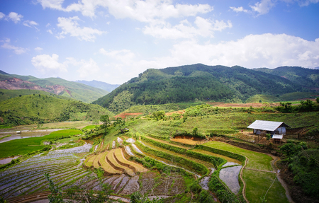 frequented: Terraced rice field with small house at summer day in Ha Giang, Northern Vietnam. Ha Giang province in northern Vietnam is less frequented by tourists.